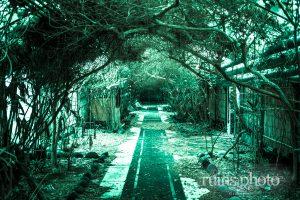 樹木で覆われたトンネルが幻想的:八丈島国際観光ホテル(東京都八丈町)