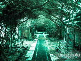 八丈島国際観光ホテル:樹木のトンネル