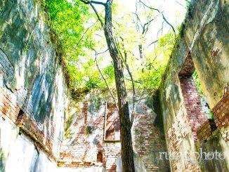 竹内農場・赤レンガ西洋館:館内で育つ木